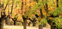 Comarcas de Pinares y El Valle en Soria